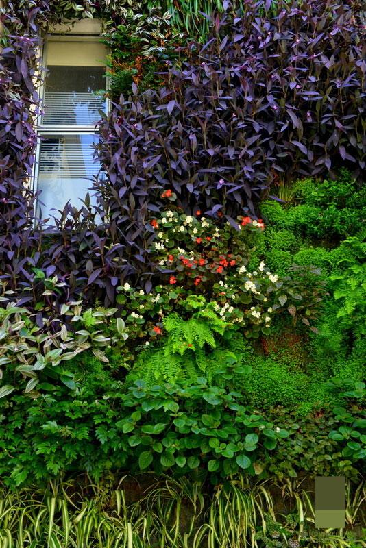 Eduardo barak jardines verticales en argentina buenos aires for Jardines verticales ecuador