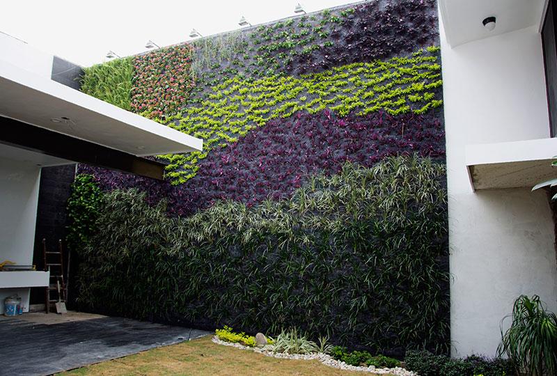 Manuel radillo muro verde en m xico tampico for Plantas para muros verdes verticales