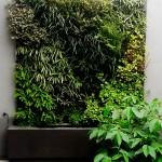 Muro verde en Peru, Daniela Silva-Rodriguez