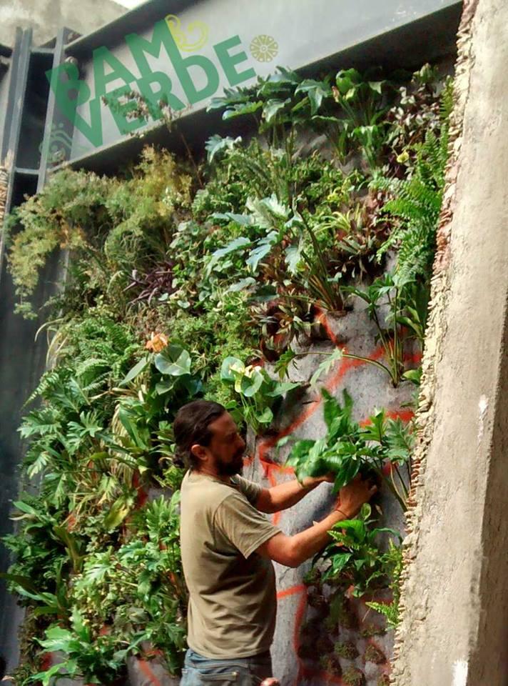 Eduardo huerta muros verdes en m xico cuernavaca for Jardines verticales ecuador
