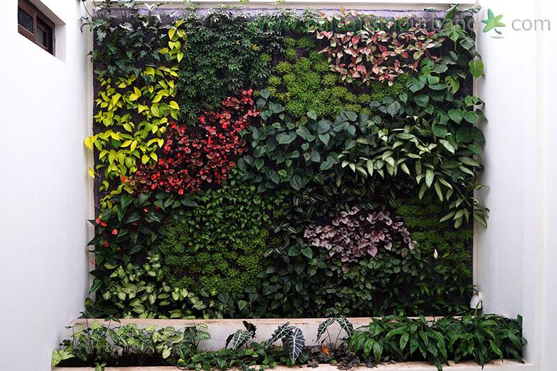 Jardin Verticale mario lópez y ariane stollreiter: jardín vertical en guatemala