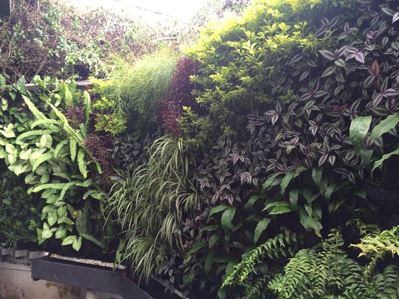 Gabriela Rendon Jardines Verticales En Guatemala