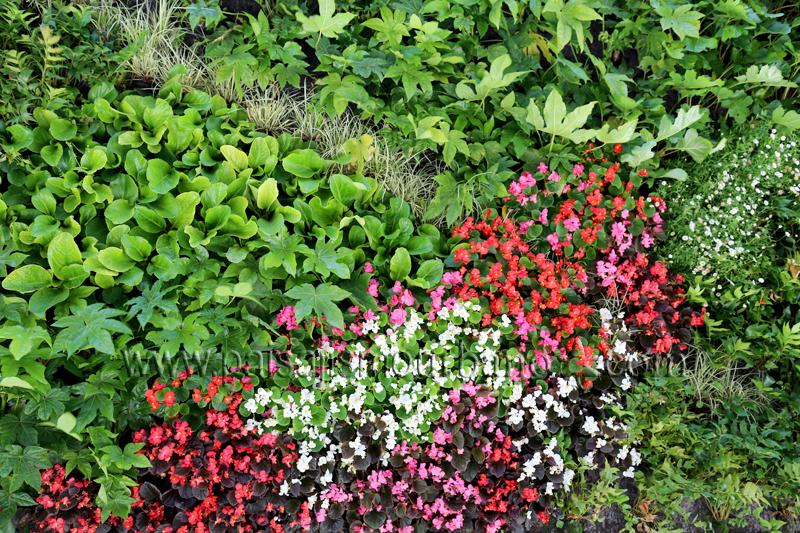 Plantas para jardines verticales stunning jardines - Plantas para jardines verticales ...