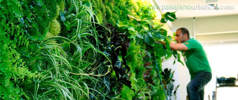Descubre c mo hacer un jardin vertical en 4 pasos for Como construir un jardin vertical paso a paso