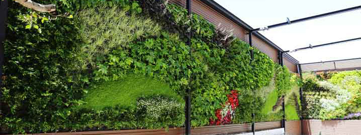 Muro verde expertos en la creaci n de muros verdes - Muros verdes verticales ...