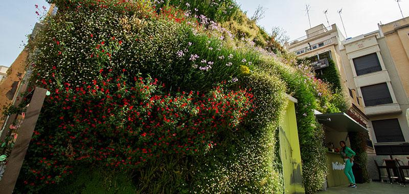 Las mejores plantas para jardines verticales - Plantas para jardines verticales ...