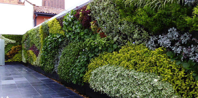 Pared vegetal panel de jardin vertical - Como hacer un jardin vertical de interior ...