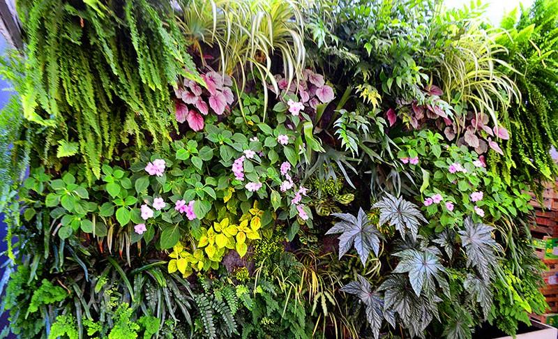 Las mejores plantas para jardines verticales for Plantas para muros verdes verticales
