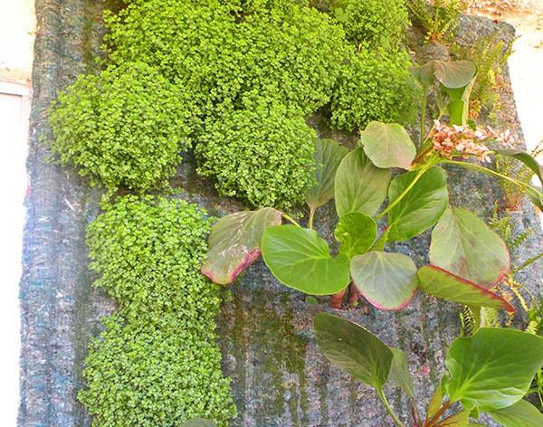Marcela gonz lez paisaje ecol gico santiago de chile for Jardines verticales ecuador