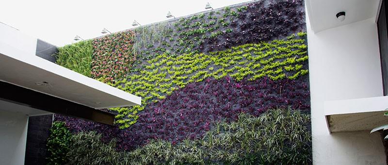 Manuel radillo muro verde en m xico tampico for Diseno de muros verdes