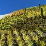Doraluz Galleguillos, jardines verticales en Chile