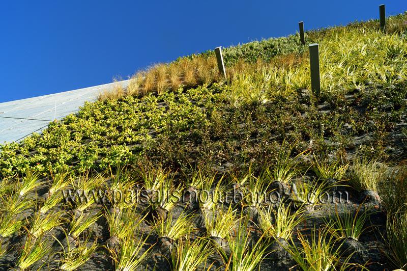 doraluz galleguillos jardines verticales en temuco chile On jardines verticales chile
