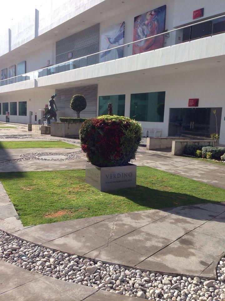 Adriana padr n jardines verticales en m xico puebla for Jardines verticales mexico