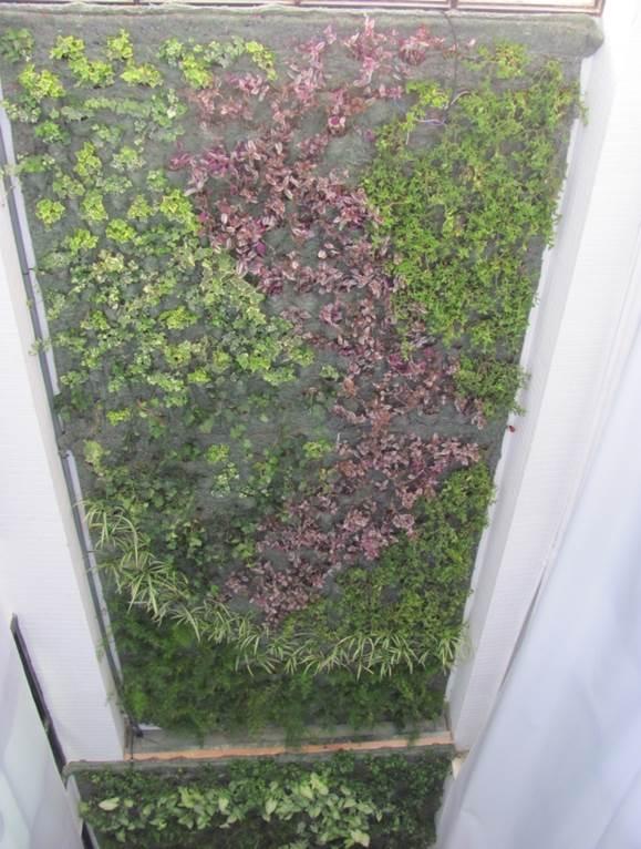 Nadir laqis masdar jardines verticales en argentina for Jardines verticales quito ecuador