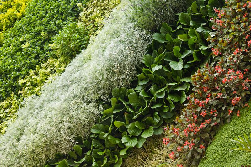 marcelo chirimoya jardines verticales en ecuador quito