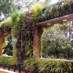 Jardines verticales en El Salvador - Eleanora Daura