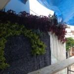 Jardines verticales en Mexico, Marcos Dario Tostado