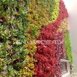 Jardines verticales en Mexico, Mariana Lozano
