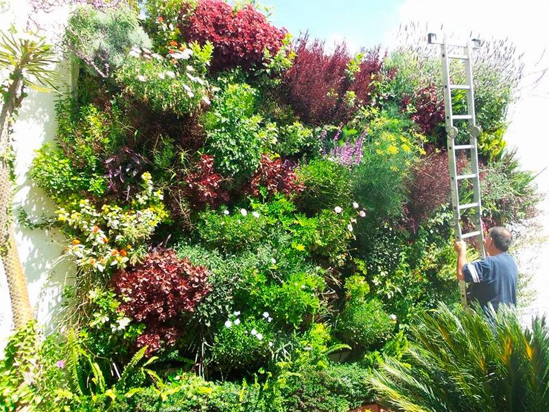 Poncho su rez jardines verticales en m xico michoacan for Jardines verticales mexico