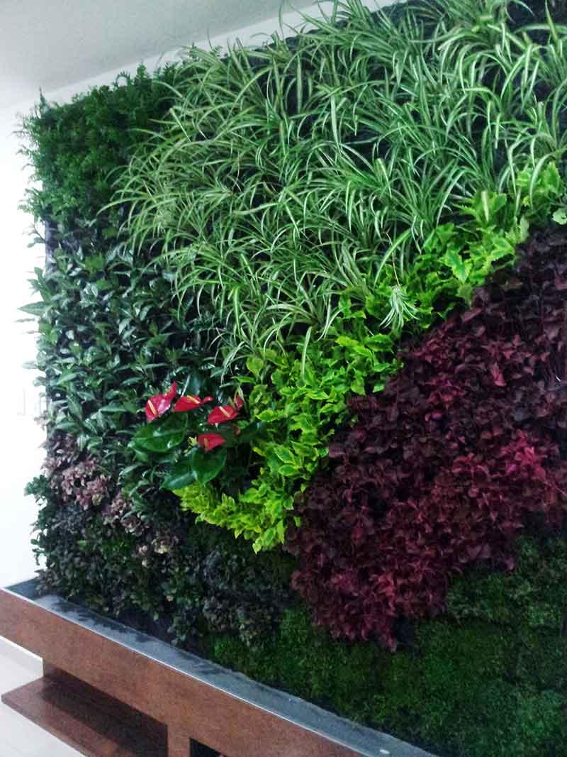 raymundo mondrag n jardines verticales en m xico df