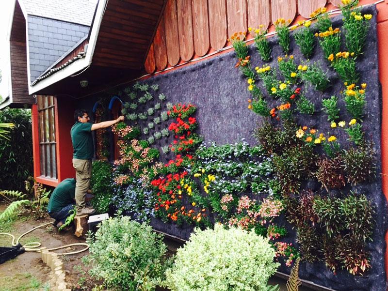 mauricio ascencio jardines verticales en araucan a chile
