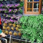 Jardines verticales en Chile, Mauricio Ascencio