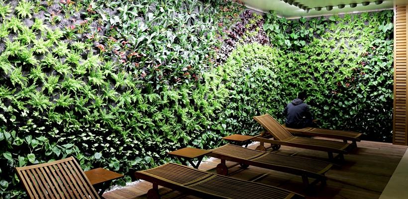 Las mejores plantas para la creaci n de jardines verticales for Plantas recomendadas para jardin vertical