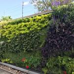 Guido Castro, jardines verticales en Argentina