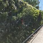 Jardines Verticales Guido Castro, Buenos Aires