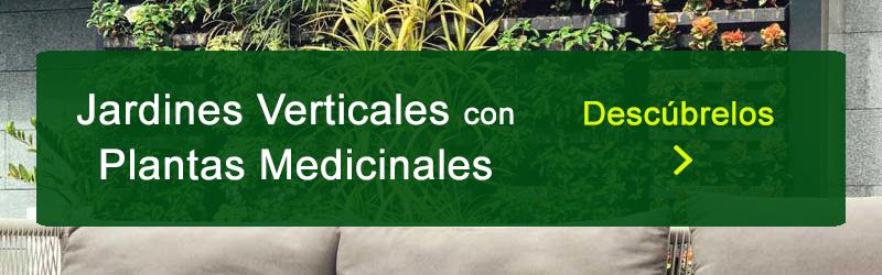 jardines verticales con plantas medicinales