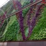 G-Wall , jardines verticales en Argentina