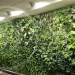 Jardines verticales en Argentina - GWall