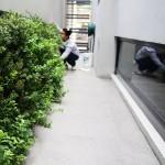 Muros verdes en Mexico, Johan Salazar