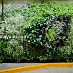Sylvia Llano, jardines verticales en México, Ciudad de México