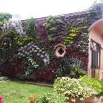 Eduardo Huerta, Bamverde, muros verdes mexico