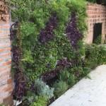 Jardines verticales Luis Pasqualini, Vivir el verde