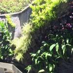 Gabriela Rendon, jardines verticales en Guatemala