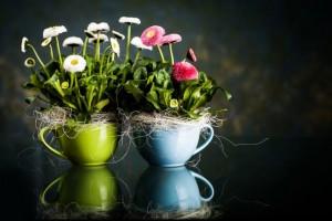 regalar plantas