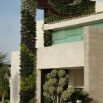 Adriana Padrón, jardines verticales en México, Puebla