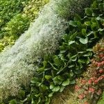 Jardines verticales en Ecuador, Marcelo Chirimoya