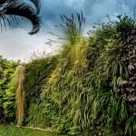 Eleanora Daura, jardines verticales en El Salvador