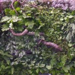 Jardines Verticales en México, Humberto Olascoaga