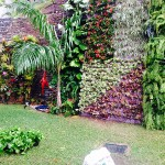 Jardines verticales en Venezuela, Raymond Dacosta