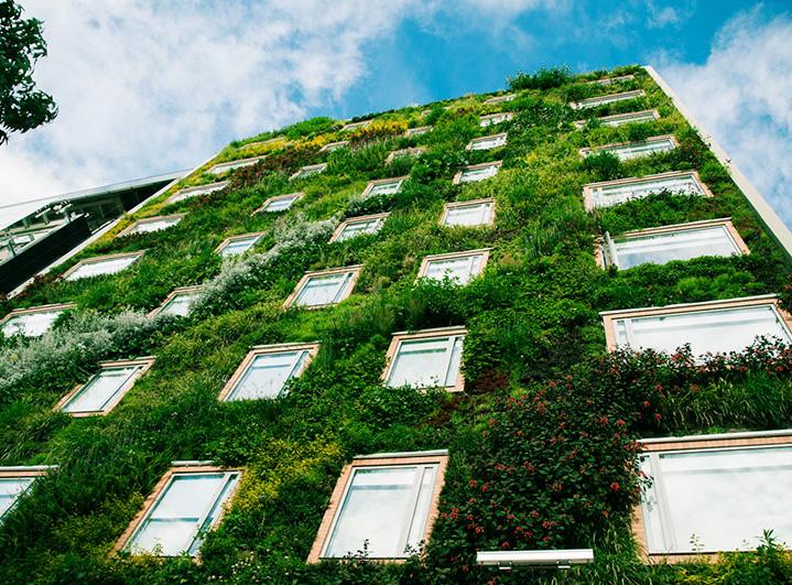 apariencia de un jardín vertical perfecto