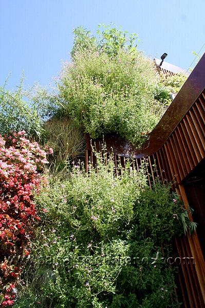 azotea techo verde duradero