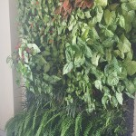 Carlos Giraldo, jardines verticales en Aruba
