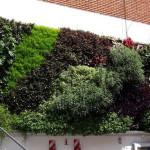 Vicky Parra, Vertec - Jardines verticales en Argentina