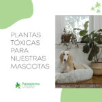 Plantas tóxicas para mascotas3