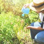 agua en jardinería